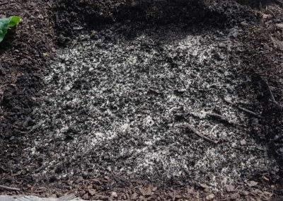 sand sprinkled on soil