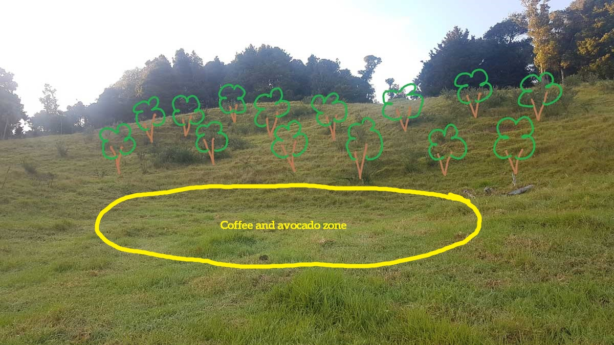 Artists impression of my future olive grove