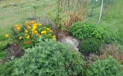 How does the garden grow?