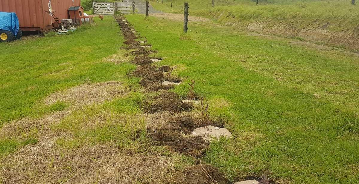 Ake ake when we planted it