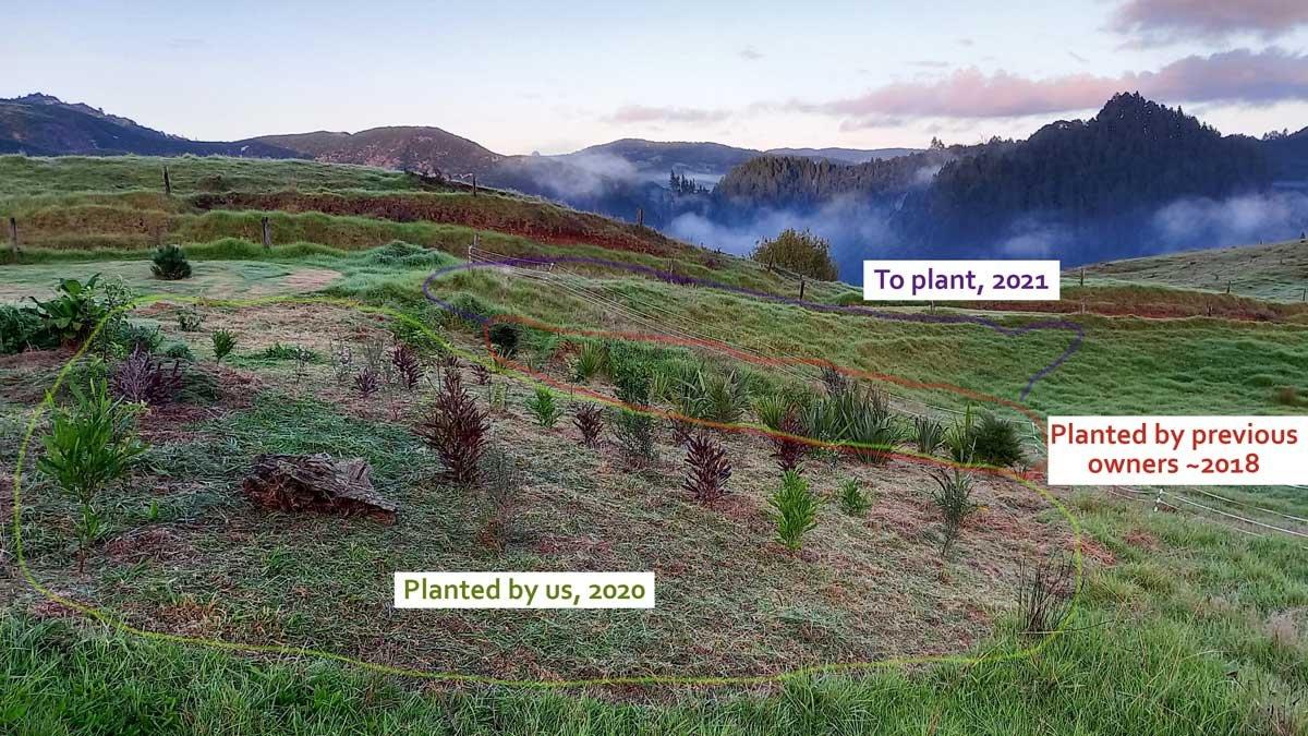Planting diagram 2021